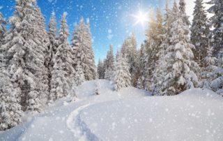 Winter Landscape Happy Holidays